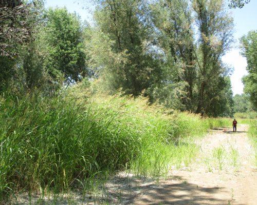 Tuolumne River Conservancy California - Grayson River Ranch
