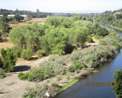 Tuolumne River Conservancy California - Waterford Riparian Restoration