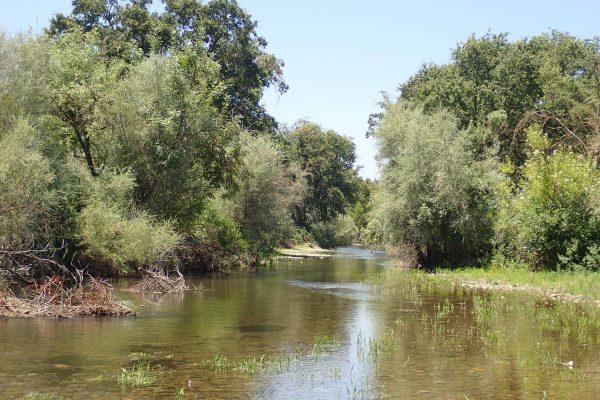 Tuolumne River Conservancy California - Duck Slough