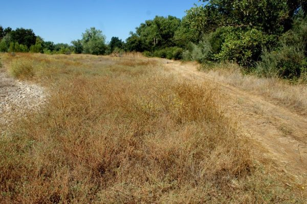 Tuolumne River Conservancy California - Bobcat Flat Phase 2 - Pre-construction Borrow area 4