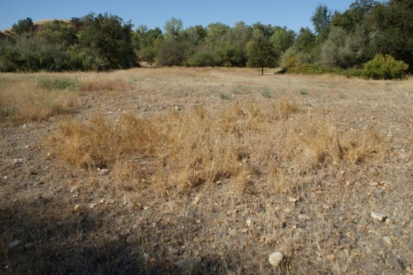 Tuolumne River Conservancy California - Bobcat Flat Phase 2 - Pre-construction Borrow Area 5