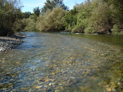 Tuolumne River Conservancy California - Bobcat Flat - Lower Patch 4 After Spawning Cobble Was Introduced