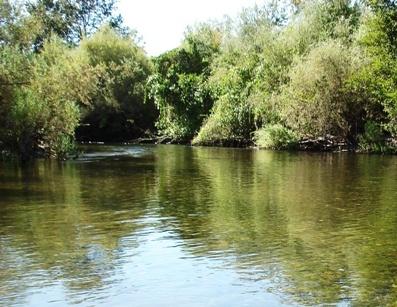 Tuolumne River Conservancy California - Bobcat Flat - Lower Patch 4 Before Spawning Restoration