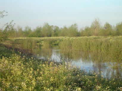 Tuolumne River Conservancy California - Grayson River Ranch - Fully Functioning Sloughs