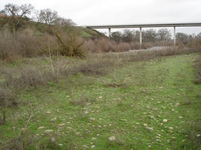 Tuolumne River Conservancy California - Waterford Riparian Restoration - Plantings in Winter
