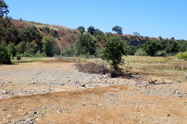 Tuolumne River Conservancy California - Bobcat Flat Phase 3 Elevated Floodplain