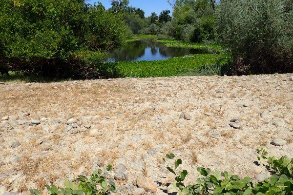 Tuolumne River Conservancy California - Bobcat Flat Phase 3 - Stagnant Pond Left by Gold Dredger